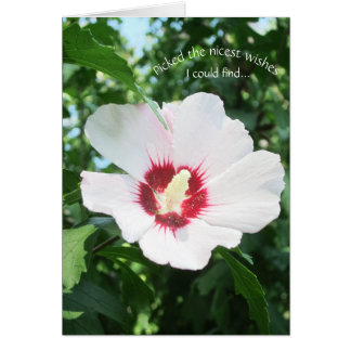Floral Summer Flower Rose of Sharon Get Well Bloom Card