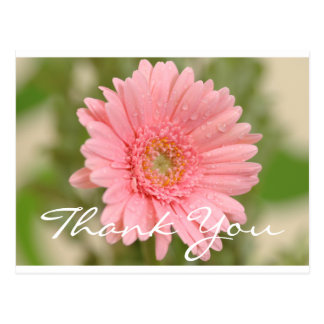 Floral Thank You Pink Gerbera Daisy Flower Postcard