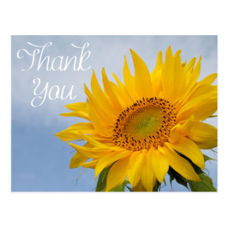 Floral Thank You Sunflower Yellow Flower Blue Sky Postcard