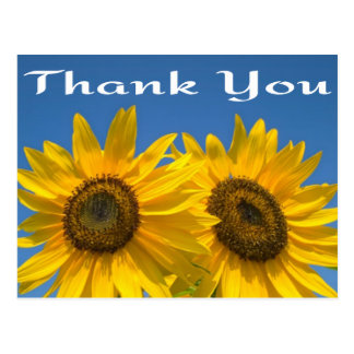 Floral Thank You Yellow Sunflower & Blue Sky Postcard