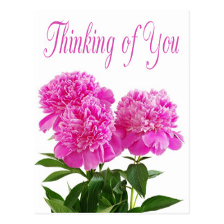 Floral Thinking Of You Pink Peony Flower Postcard