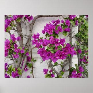 floral vine posters