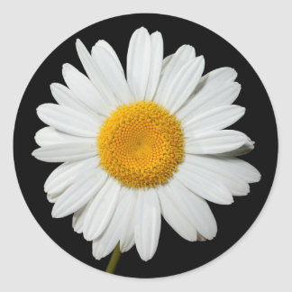 Floral White Daisy Flower Black Wedding Party Classic Round Sticker