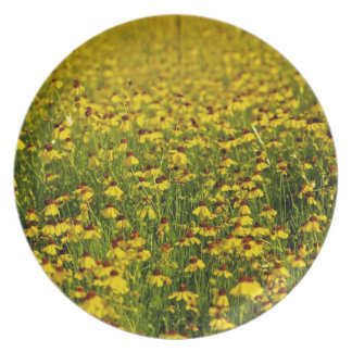 Floral yellow wildflowers photo plate