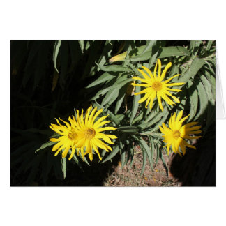 """Flores en mi hierbas """"Flowers in my Weeds"""" Card"""