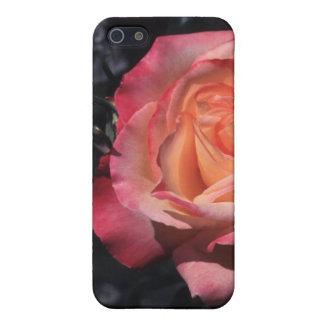 Floribunda Rose Sheila's Perfume Cover For iPhone 5/5S