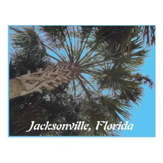 Florida beach Postcard - Palm tree