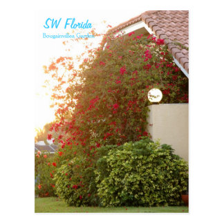 Florida Bougainvillea Garden Postcard
