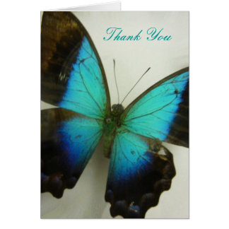 Florida Butterfly Card