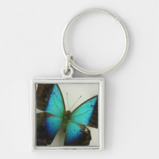 Florida Butterfly Silver-Colored Square Key Ring