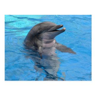 Florida Dolphin Postcard