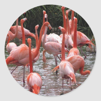 Florida Flamingos Classic Round Sticker