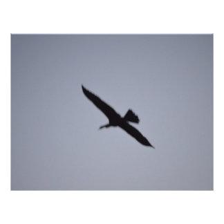 florida great white egret against sky shadow bird flyers