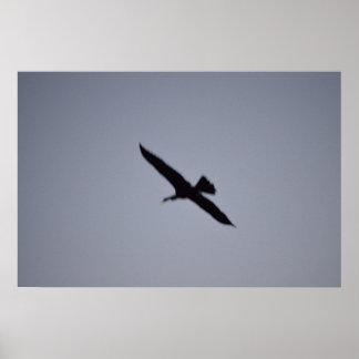 florida great white egret against sky shadow bird print