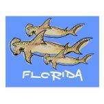 Florida hammerhead sharks postcard