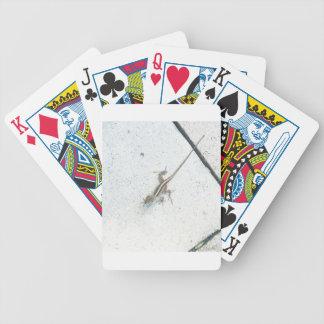 Florida Lizard Bicycle Playing Cards