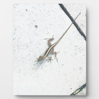 Florida Lizard Photo Plaque