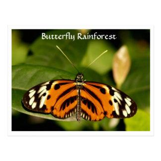 Florida Museum  Butterfly Rainforest Postcard