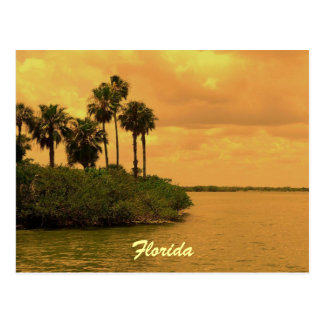 Florida Palm Tree Reverie Postcard