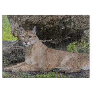 Florida Panther Cutting Board