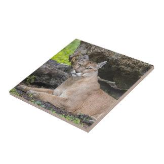Florida Panther Tile