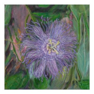 FLORIDA PASSION FLOWER Poster