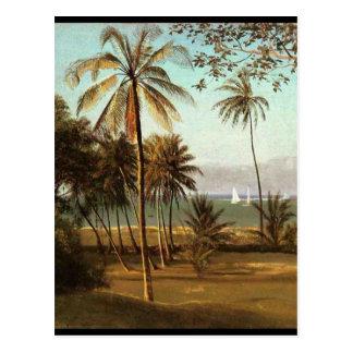 Florida Scene - Albert Bierstadt Postcard