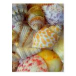 Florida Seashells Postcards