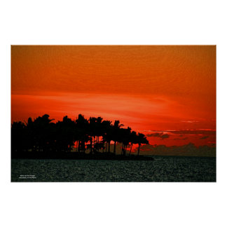 Florida sunset with palm trees posters