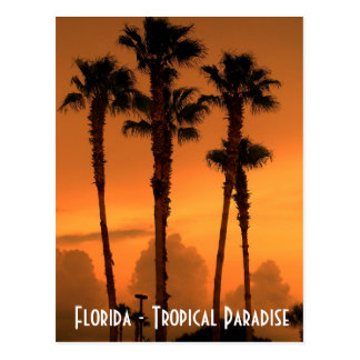 Florida Tropical Paradise Sunset Postcard Photo