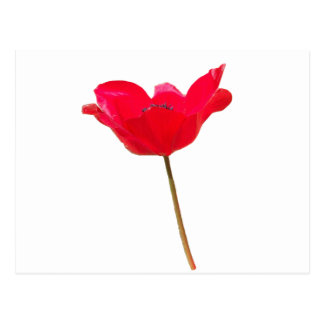 Flower23 Postcard