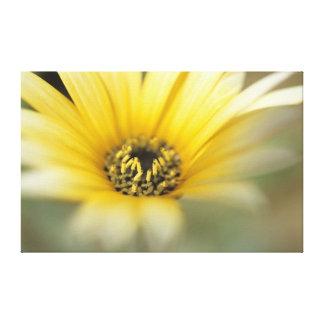 Flower #1 yellow daisy canvas prints