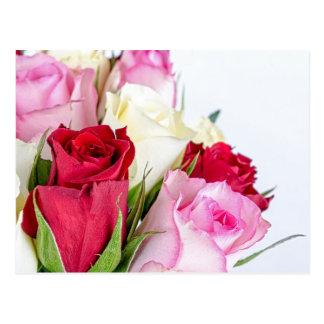 flower-316621 flower flowers rose love red pink ro postcard