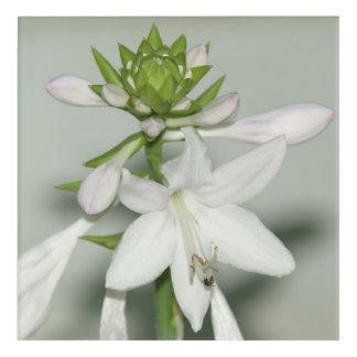 Flower, Acrylic Print. Acrylic Print