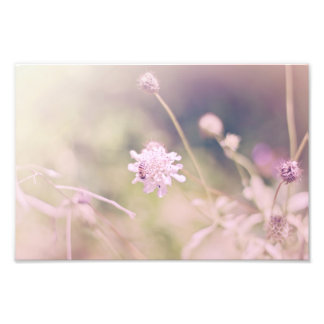 Flower and Bee Pastel Photograph