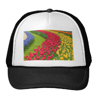 Flower beds of multicolored tulips cap