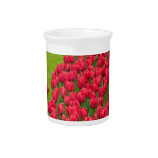 Flower beds of multicolored tulips drink pitchers