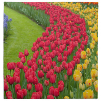 Flower beds of multicolored tulips napkin