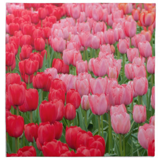 Flower beds of red and pink tulips napkin