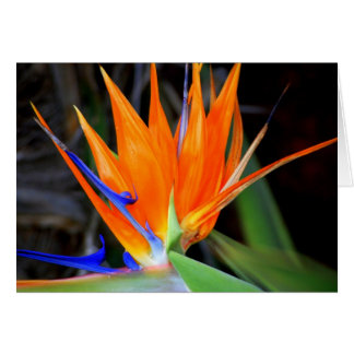 Flower: Bird of Paradise Card