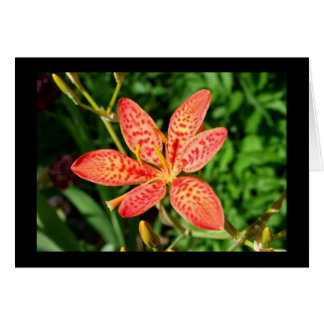 Flower- Blank Card