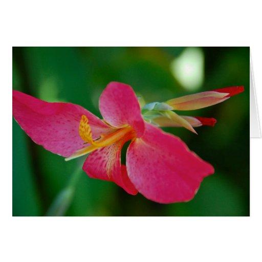 Flower Blank Greeting Card