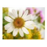 Flower Bouquet - White Daisy Post Cards