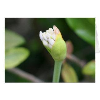 Flower bud Blank Inside Greeting Cards