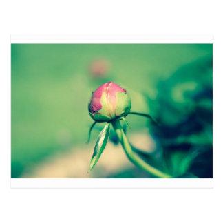 flower bud crossprocessbulb postcard