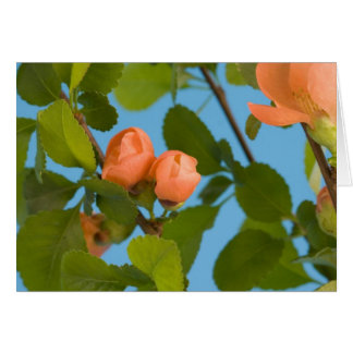 flower buds note card