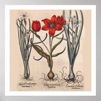 Flower Bulbs Botanical Print