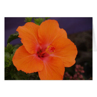 Flower Card Blank