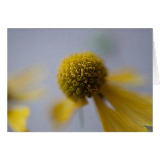 Flower Cards (Hazed)