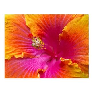Flower - Chinese Hibiscus - Appreciation Postcard